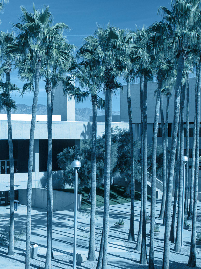 West Campus courtyard with palm trees
